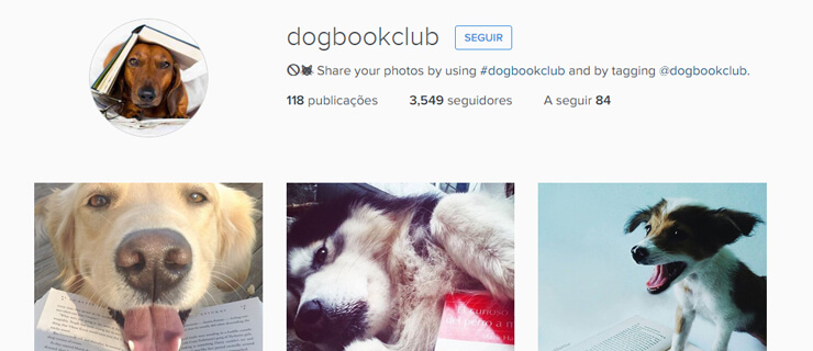 dog-book-club-mundo-de-livros